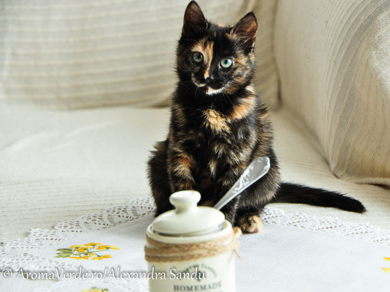 Untul si pisica