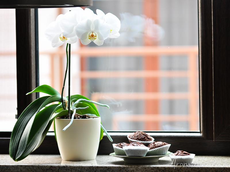 Orhidee și brioșe