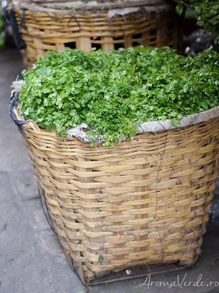 Coriandru verde și proaspăt Bangkok