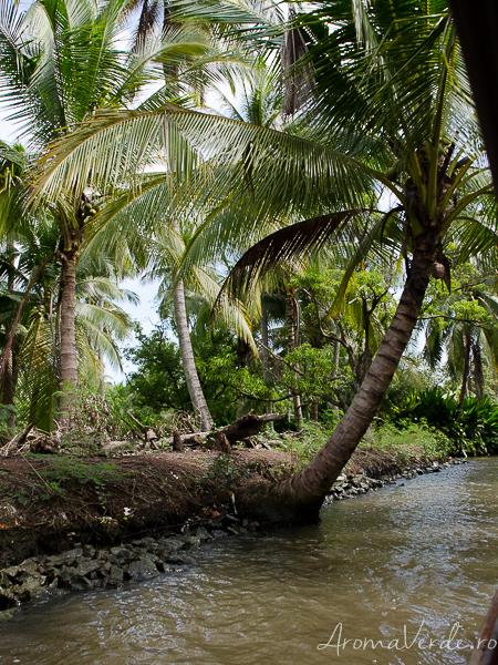 Palmier piața plutitoare