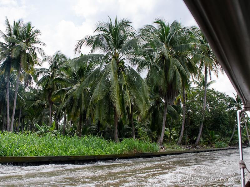 Palmieri Thailanda